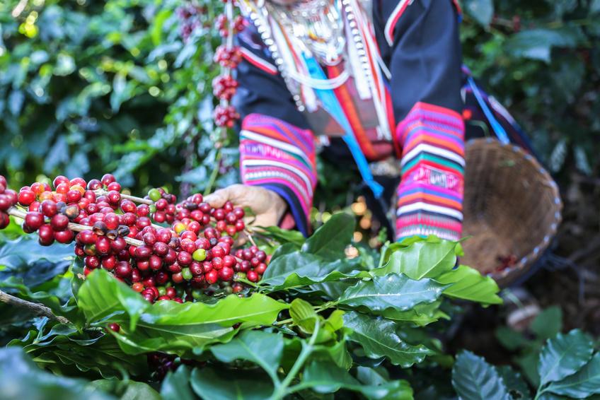 Cafe Equateur 250 Grs