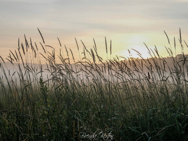 photo of sunset by water and tall grasses