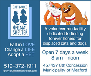 Grey Bruce Animal shelter ad with cute cat and dog.