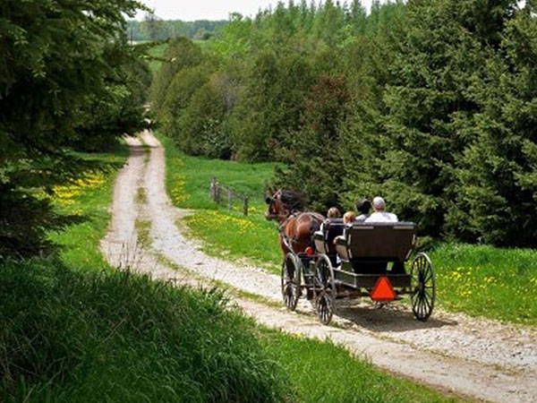 Horse and buggy travelling down a gravel road.