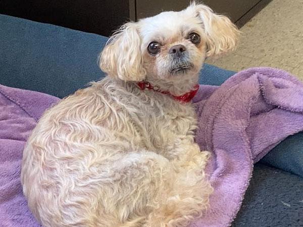 Adoption of the week: meet Bailey