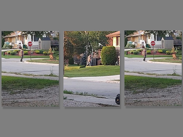 Suspect photos captured from area security cameras.