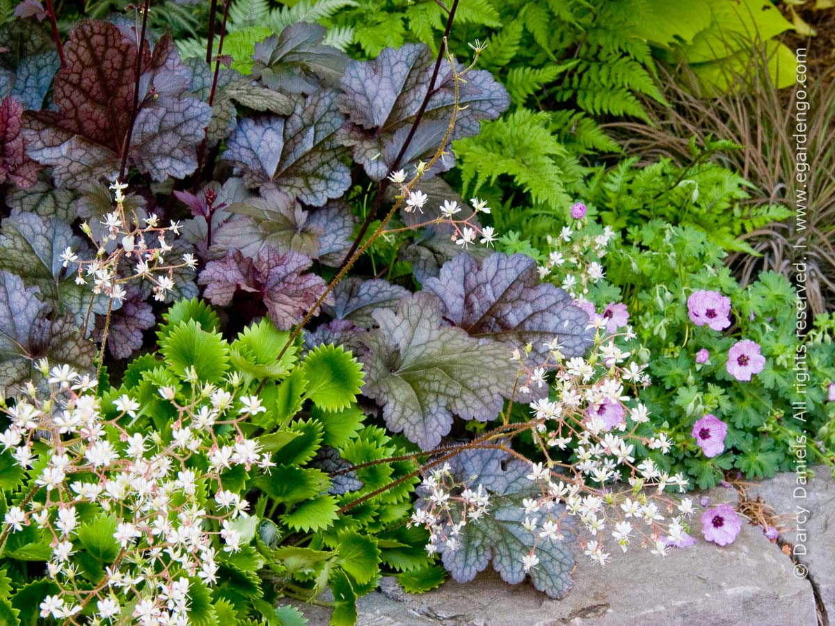 Perennial Plant Combo For Part Shade